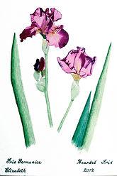 student Elizabeth botanical.jpg