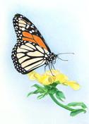 ws butterfly.jpg