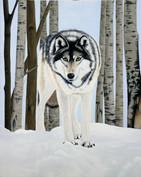 wolf in woods.jpg