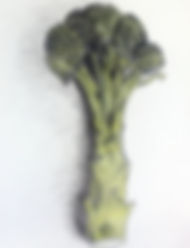 student broccoli cool and French grey.jp