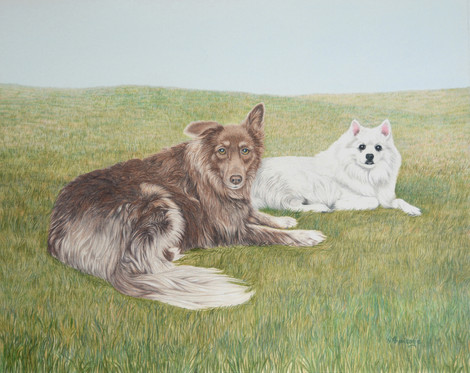 mixed breed and American Eskimo dog