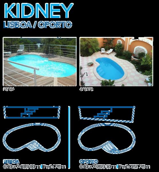 model kidney 2