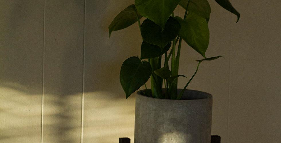 Monstera Plant Ensemble