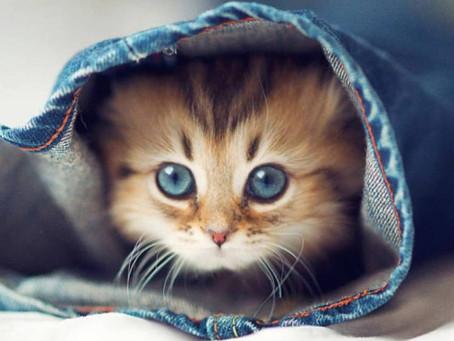 Le chat : le plus magique des animaux