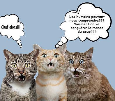 COM ANIMALE.jpg