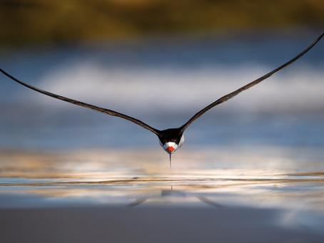 La symbolique des plumes, comportements et vols des oiseaux
