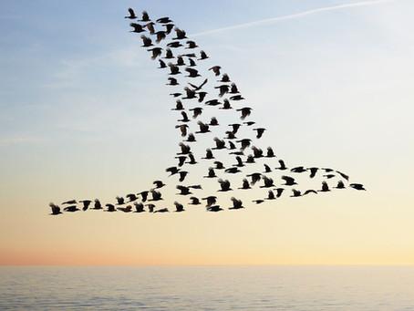 Les Oiseaux et leurs messages