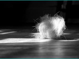 Style Snapshot: The Dust Bunny