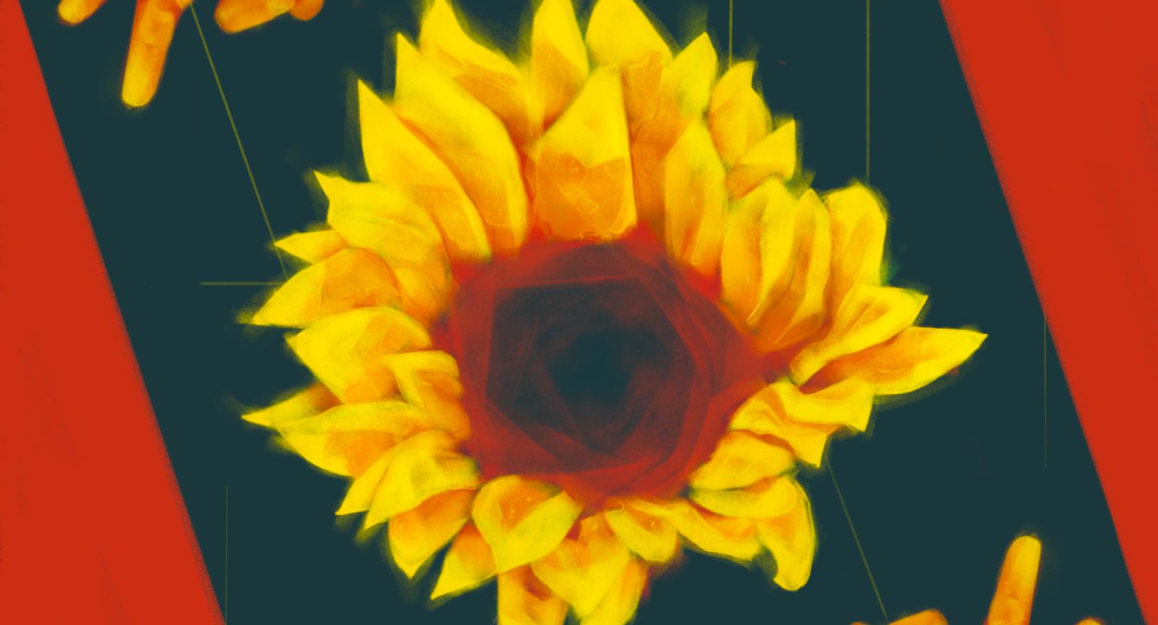 Sunflower __ ひまわり