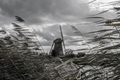 netherland-9603.jpg