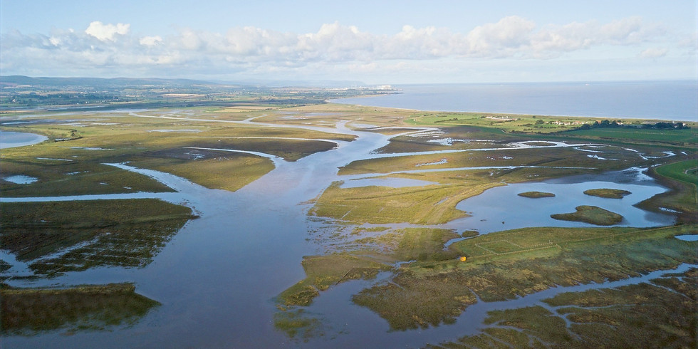 Steart Peninsular and Marshes: A working wetland wildlife walk - 4 miles / 3 hours