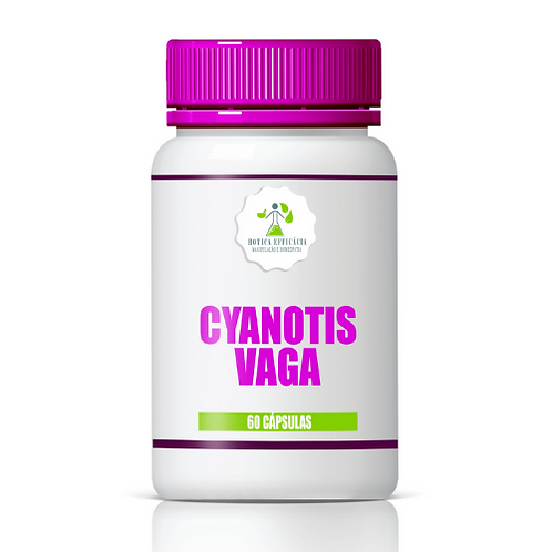 Cyanotis Vaga