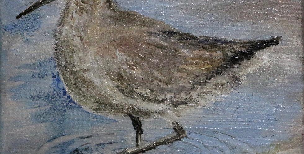 """""""Shore Bird"""" 8x8"""
