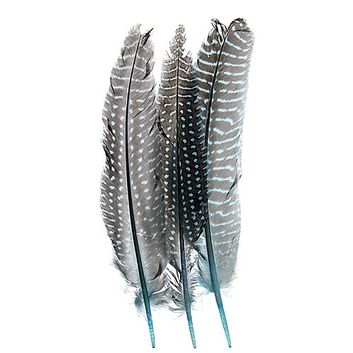 """GUINEA FOWL QUILL 6-9""""TURQUOISE"""