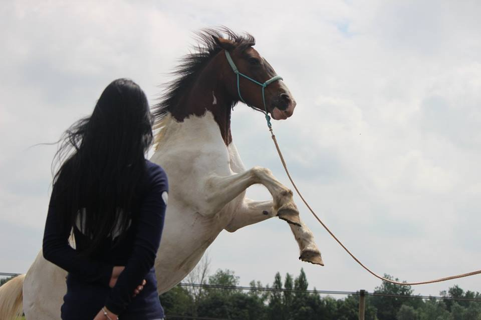 Paard in training