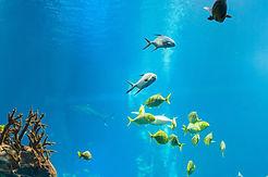 Under Water