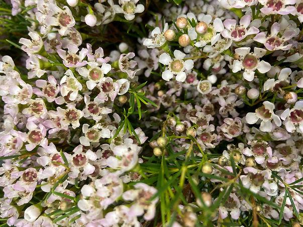 muscari whites florist