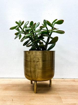Metal Gold pot, Small