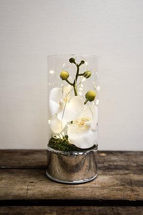 Orchid light decor