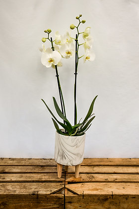 Orchid white marble