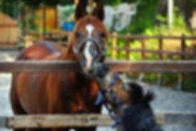 horse-2398371_960_720.jpg