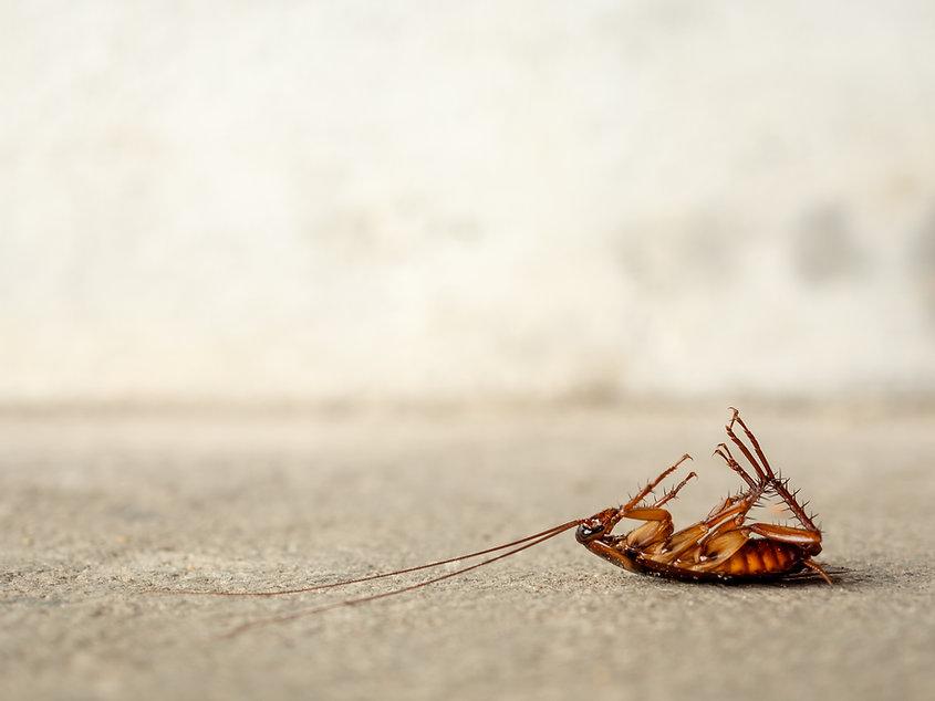 dead-cockroach-floor.jpg