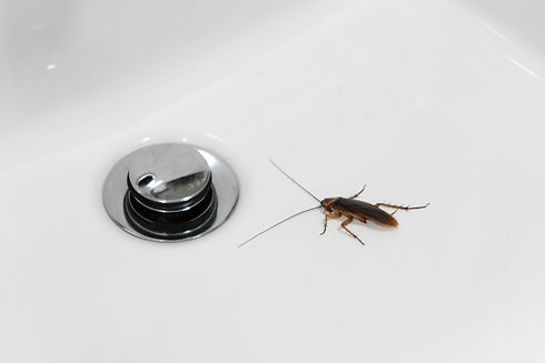 cockroach-bathroom-sink-problem-with-ins
