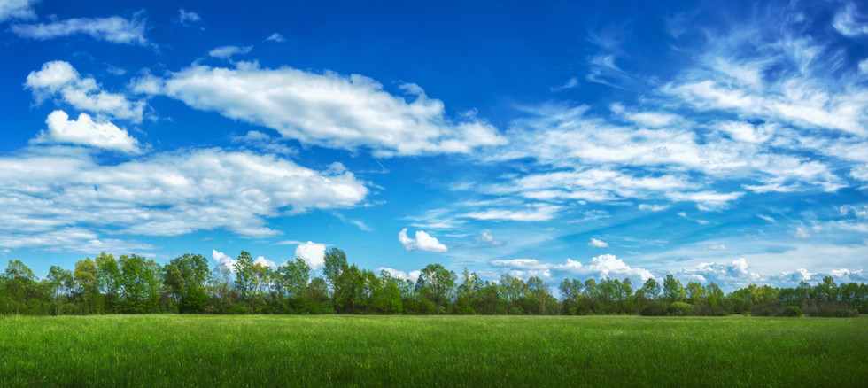 panoramic-view-field-covered-grass-trees