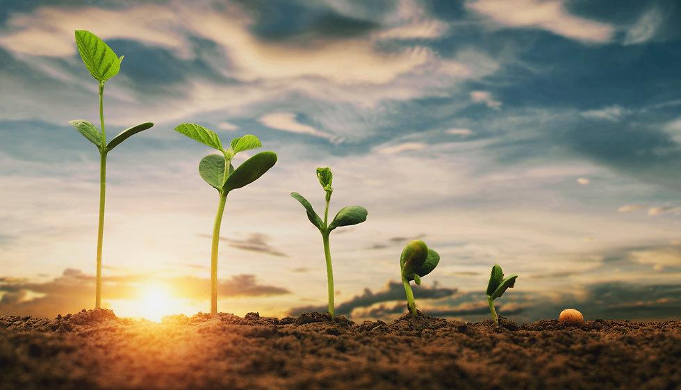soybean-growth-farm-with-blue-sky-backgr