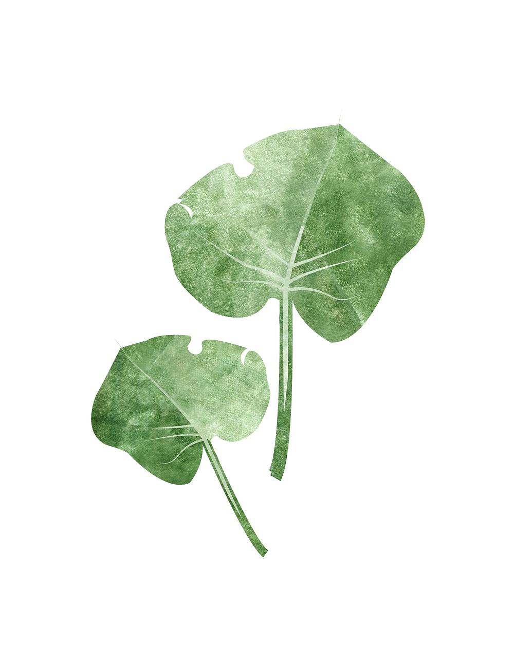 Monstera Leaf, Monstera Leaf