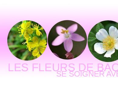 Répondre à ses besoins avec les fleurs du Dr Bach