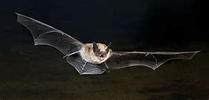 Batty about Bats at Peachland's BEEPS