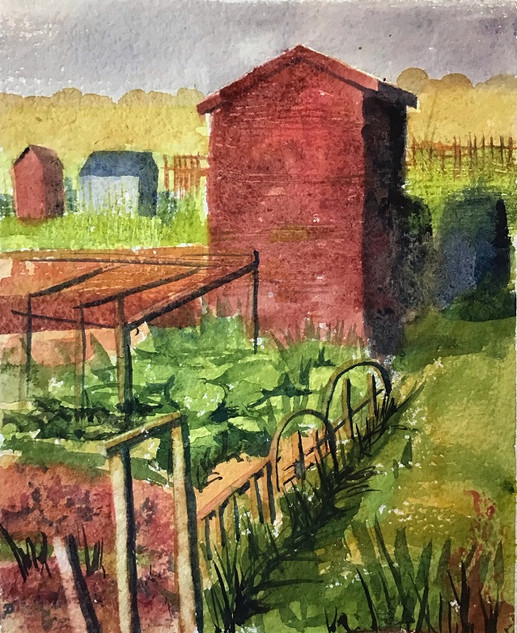 Red Shed. Allotments.