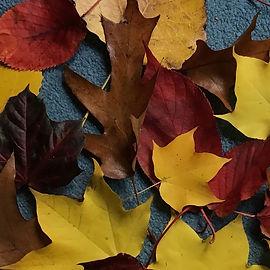 leaves (3).jpg