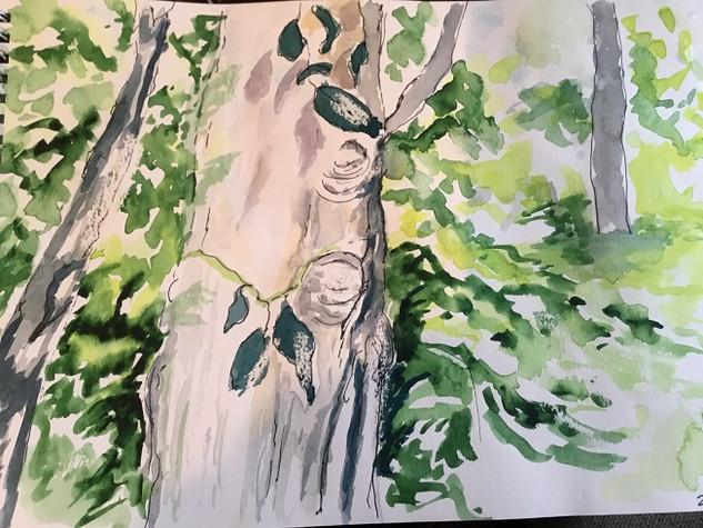 Oak Before Ash (1).jpg