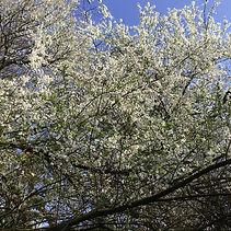 blossom (2)30.jpg