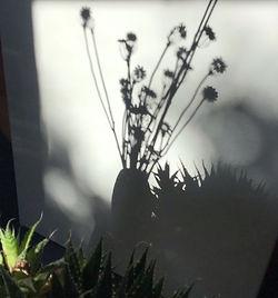 shadows (6).jpg