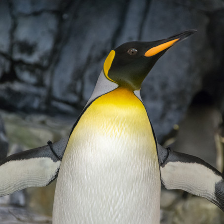 Do you Know About Emperor the Penguin?