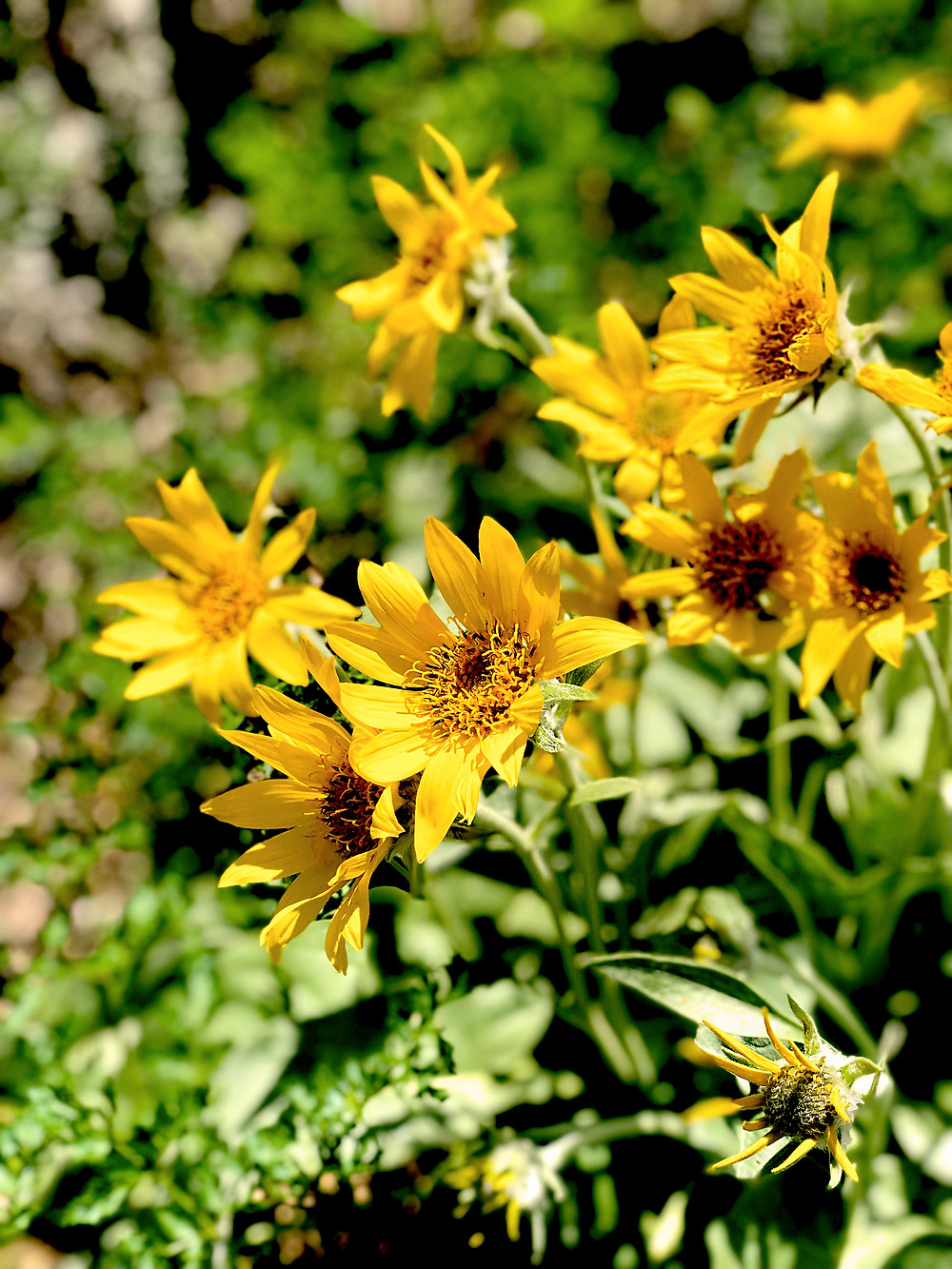 Wild flowers are abundant during the Spring month in Sinks Canyon State Park - Photo Credit Alyx Raven Miller