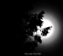 Moon oh moon