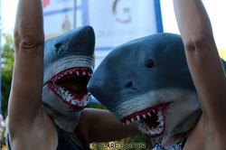 Sharks Concerts at Commons