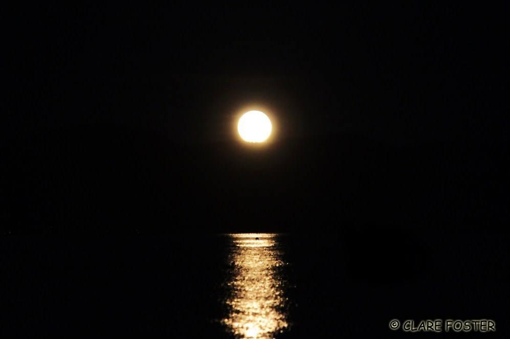 hello moon