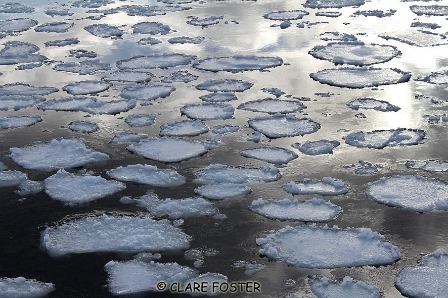 Ice Pads