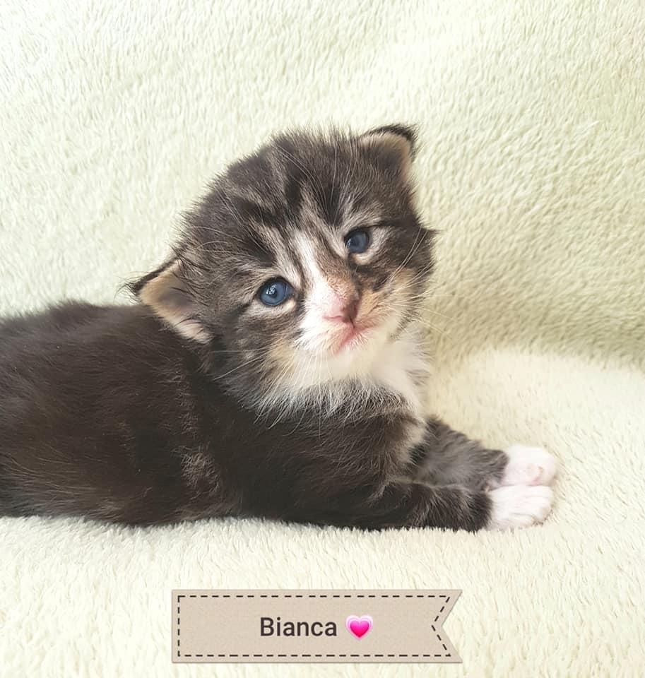 BR* Miadore Bianca