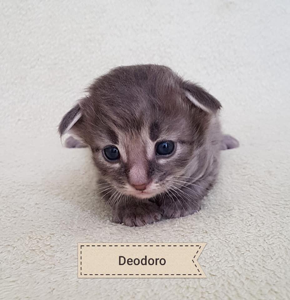 BR* Miadore Deodoro