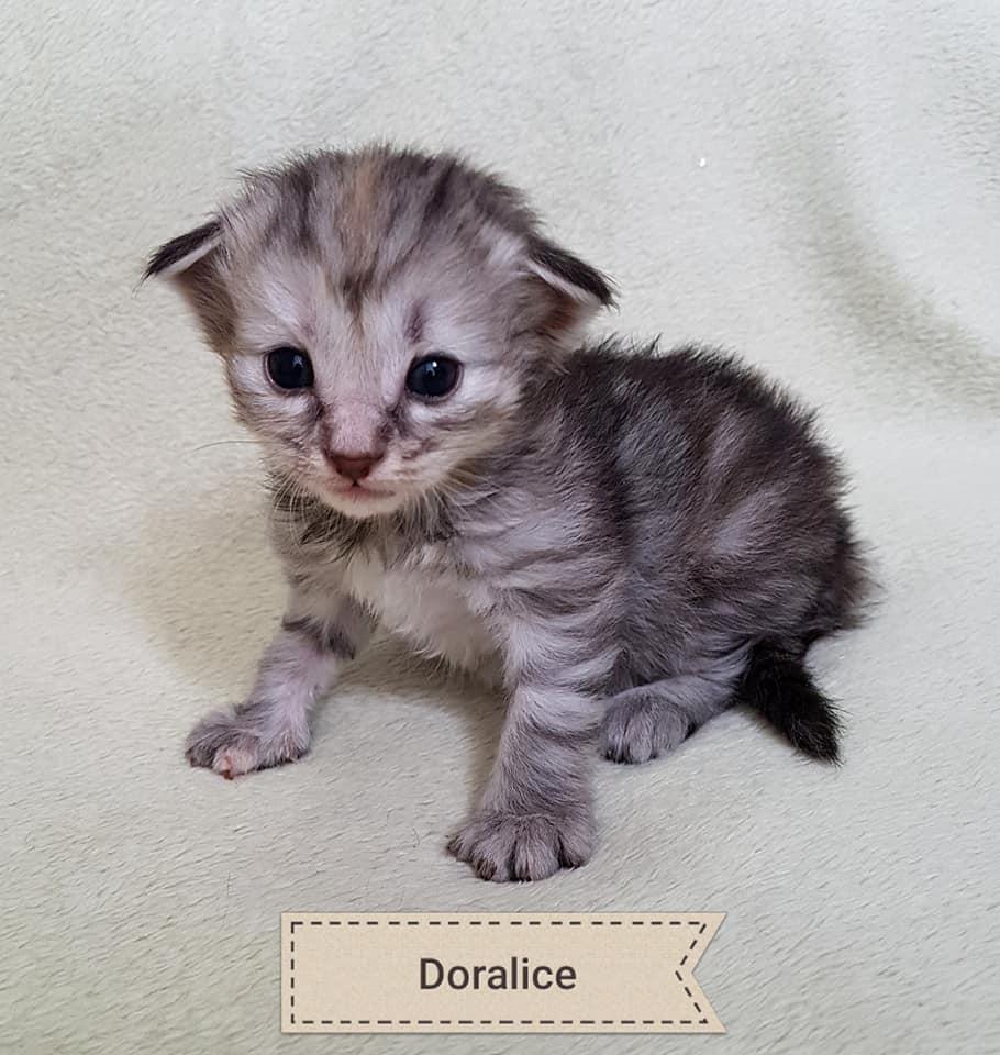 BR* Miadore Doralice