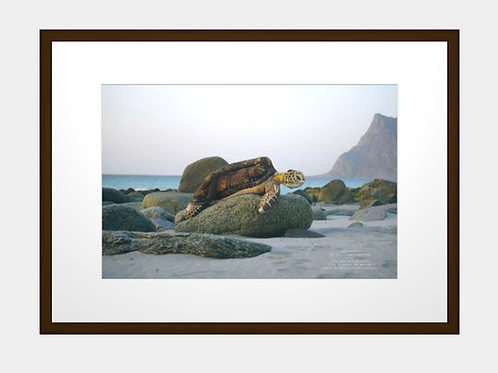"""Sea Turtle"" framed  high quality art photo print 50x70"