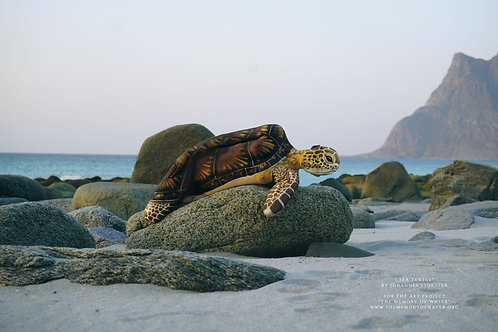 """"""" Sea Turtle"""" 100x120 cm ( London lux frame with exclusive picture material)"""