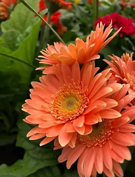 flowers%20b.webp