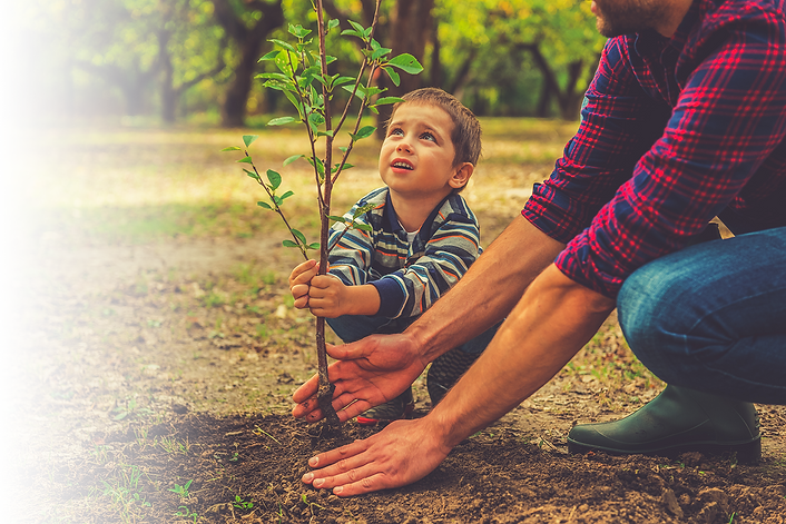 a boy and his father planting a tree
